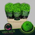 CHR S Country vert - C. van Wijk