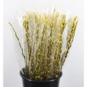 Bq Salix geel p/7 ** bl - Kariflex Bv