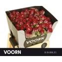 R branchue B-BUBBLES - Voorn Sprayroses