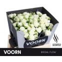 R branchue BRIDAL FLOW - Voorn Sprayroses
