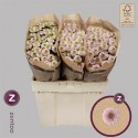 Chr S Aaa Doria pp rose Pink - Zentoo
