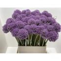Allium gladiator bleu - Hkw. R. Beentjes