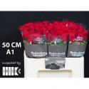 R Gr red naomi - Rodenburg Roses