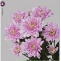 deco baltica pink - Zentoo