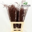 65cm Extra V. Klb H% rouge - Jan Mulder