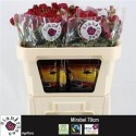 R branchue mirabel rouge - Sian Agriflora