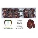 anthurium Tropic Night - Anthurmiddendorp