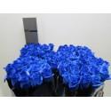 R Gr Vende Klb H% - Trendy Roses