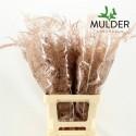 65cm Extra V. Klb H% Koper - Jan Mulder