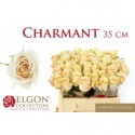 R GR CHARMANT - Elgon Collection