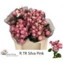 R branchue SILVA PINK+ - H. und S. Kretz