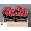 R branchue EYEOPENER - Flora Ola Ltd.