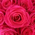 R pink floyd - equateur