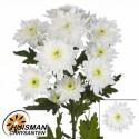 deco bonita blanc - Firma P. Huisman & Zn