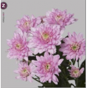 deco Baltica Pink - Linflowers